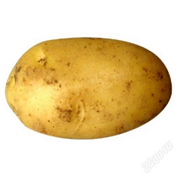 Сорт картофеля: Лина