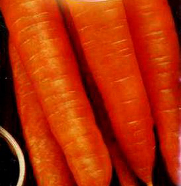 Сорт моркови: Лонге роте