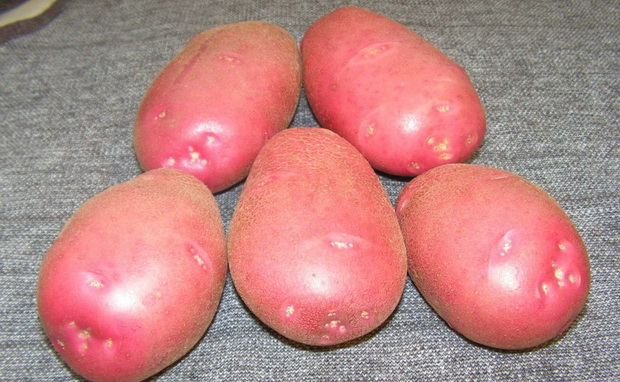 Сорт картофеля: Любава