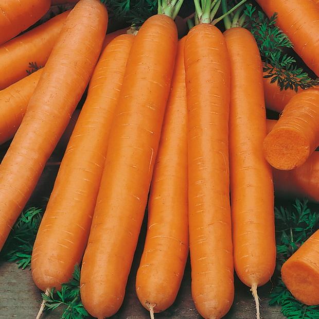 Сорт моркови: Маэстро   f1