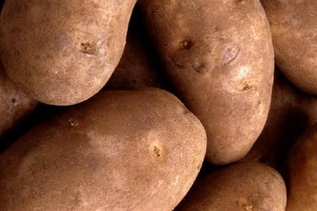 Сорт картофеля: Мастер