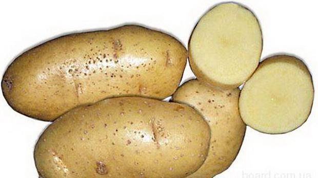Сорт картофеля: Маяк