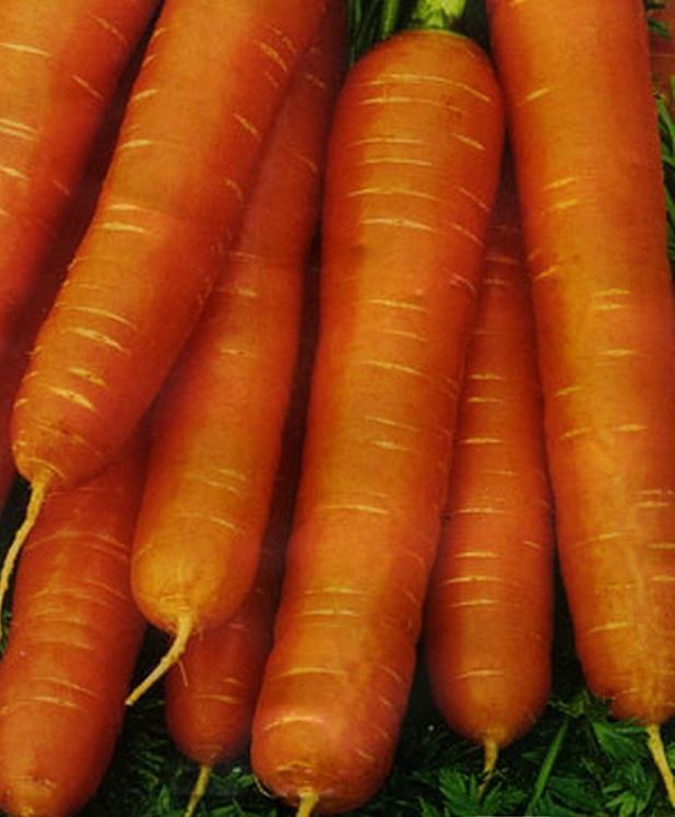 Сорт моркови: Медовая