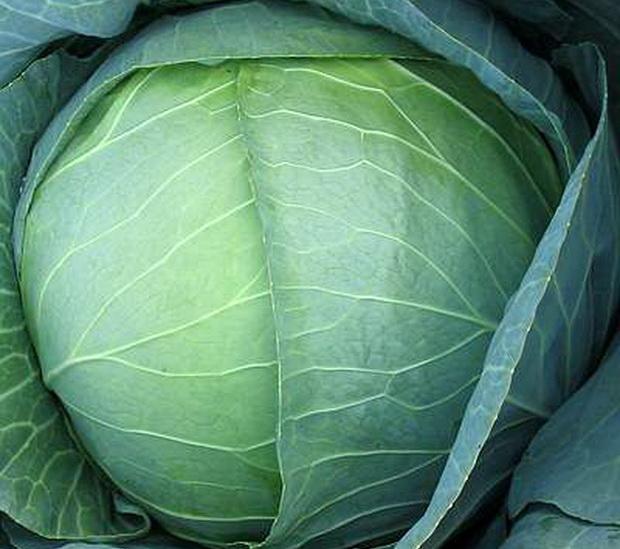 Сорт капусты белокочанной: Мегатон   f1