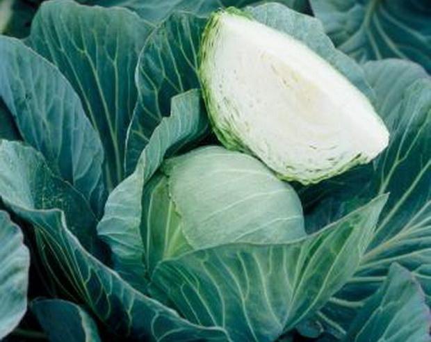 Сорт капусты белокочанной: Металор   f1