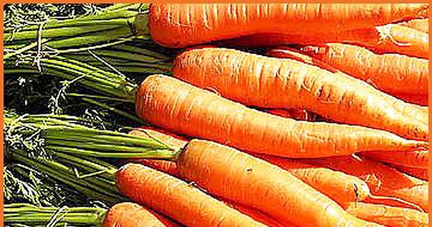 Сорт моркови: Микуловская