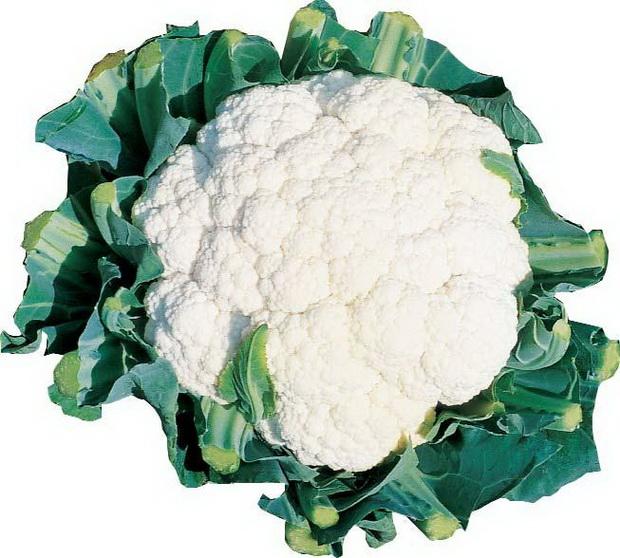 Сорт капусты цветной: Миньон   f1