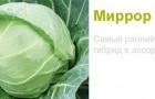 Сорт капусты белокочанной: Миррор f1