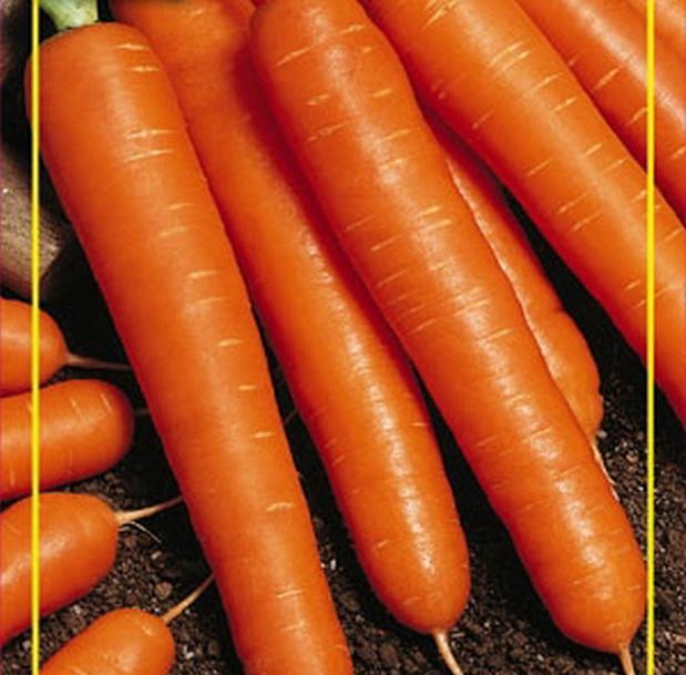 Сорт моркови: Москвичка