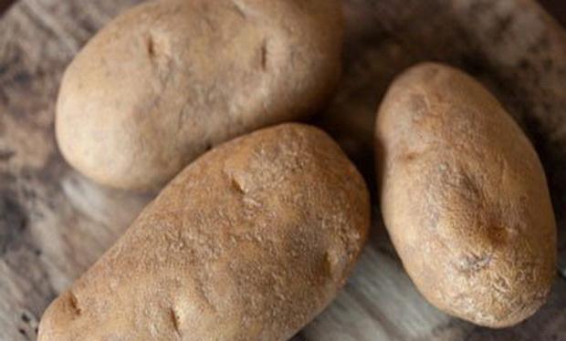 Сорт картофеля: Музыка