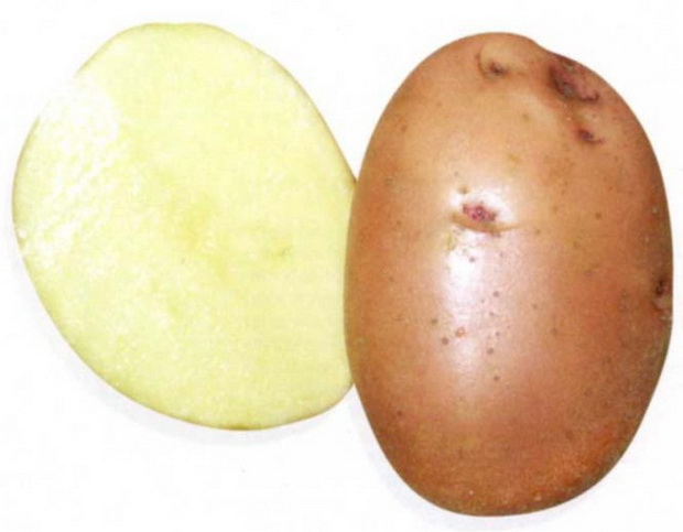 Сорт картофеля: Накра