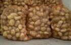 Сорт картофеля: Нальчикский