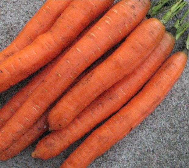 Сорт моркови: Нанко   f1