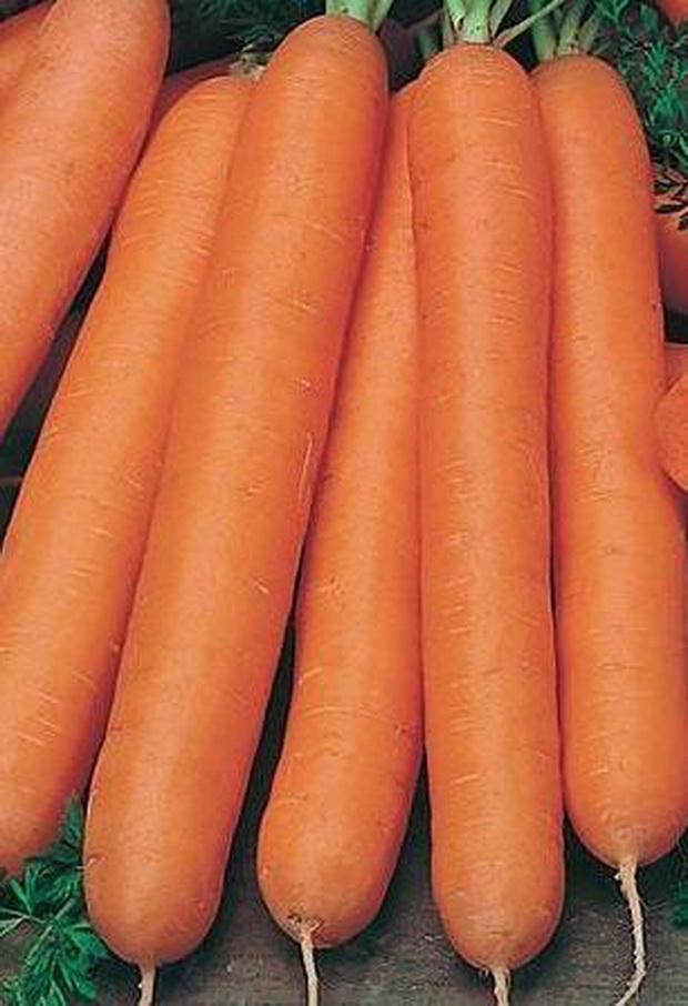 Сорт моркови: Нанте