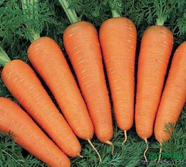 Сорт моркови: Нантейска