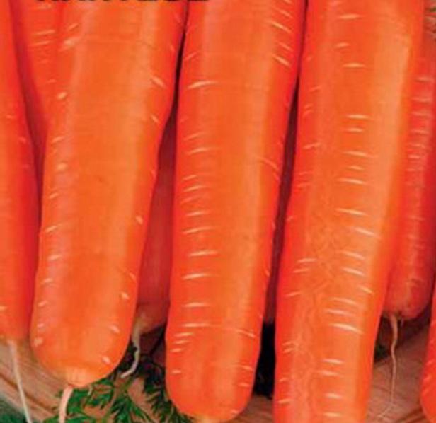 Сорт моркови: Нантезе