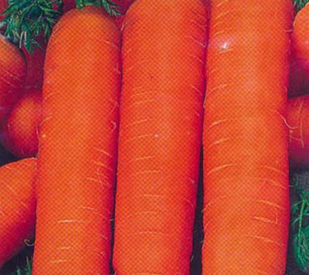 Сорт моркови: Нантик резистафлай   f1