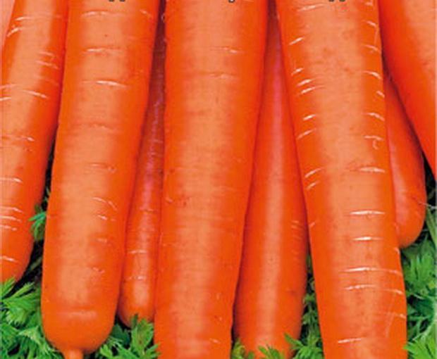 Сорт моркови: Нантская красная