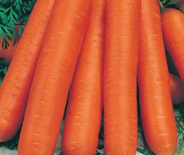 Сорт моркови: Навал   f1