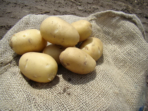 Сорт картофеля: Наяда