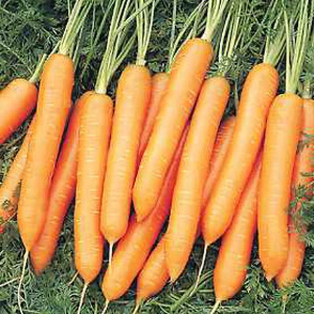 Сорт моркови: Найджел   f1