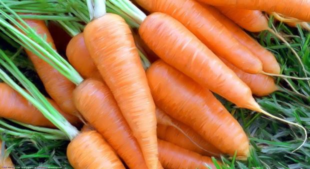 Сорт моркови: Нелли   f1