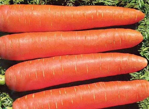 Сорт моркови: Нежная