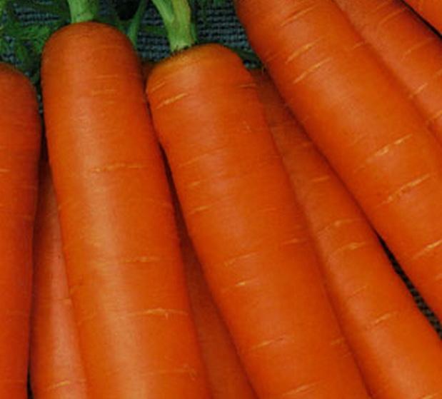 Сорт моркови: Нежность