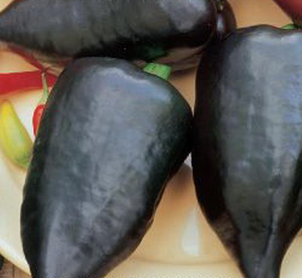 Сорт перца сладкого: Ноктурн