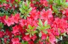Огурцы и садовые цветы