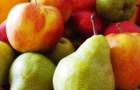 Определитель вредителей плодовых культур
