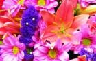 Определитель вредителей цветов