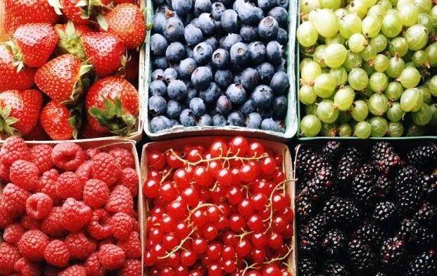 Определитель вредителей ягодных культур