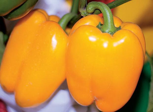 Сорт перца сладкого: Оранжевое наслаждение   f1