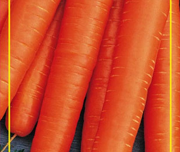Сорт моркови: Осенний король