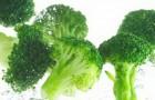 Сорт капусты цветной: Овиедо f1