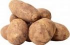 Сорт картофеля: Памяти кулакова