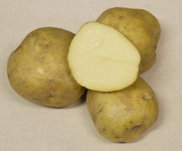 Сорт картофеля: Памяти осиповой