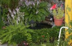 Памятные растения в саду