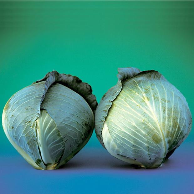 Сорт капусты белокочанной: Парадокс   f1