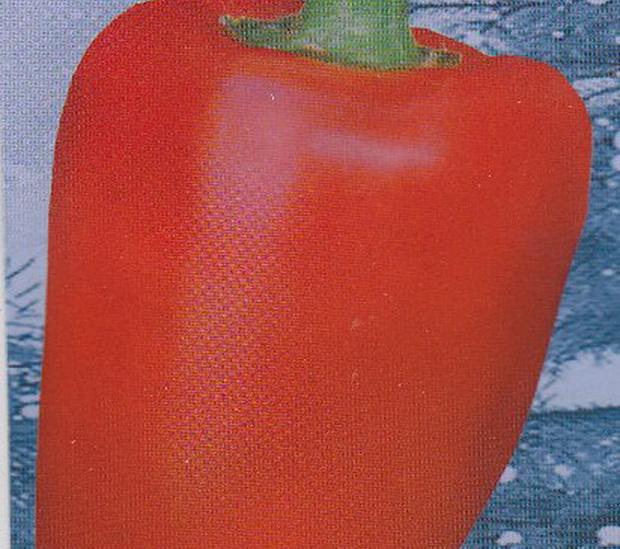 Сорт перца сладкого: Первенец романцова