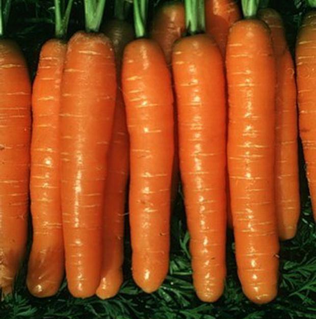 Сорт моркови: Подруга