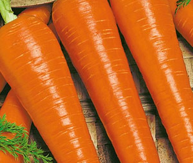 Сорт моркови: Подружка