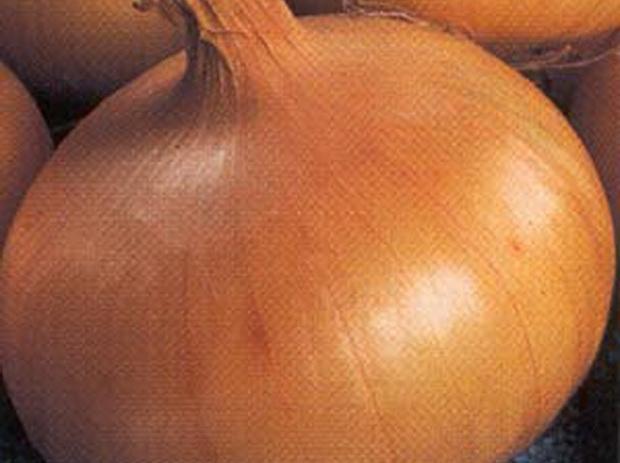 Сорт лука репчатого: Погарский местный улучшенный