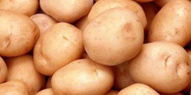 Сорт картофеля: Погарский