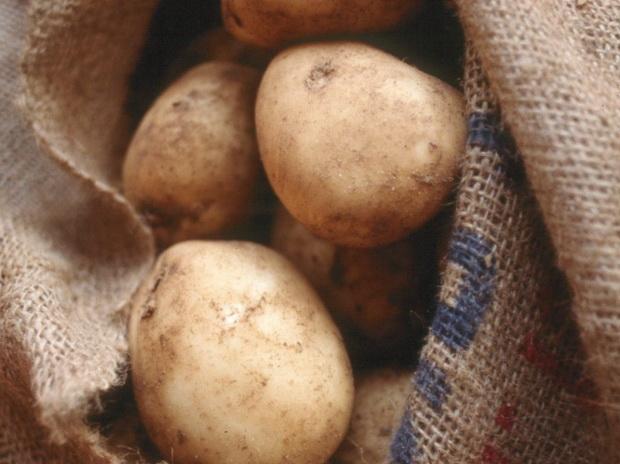 Сорт картофеля: Полонез