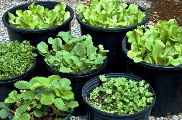Портативное садоводство