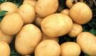 Сорт картофеля: Предгорный