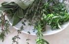 Препараты из трав