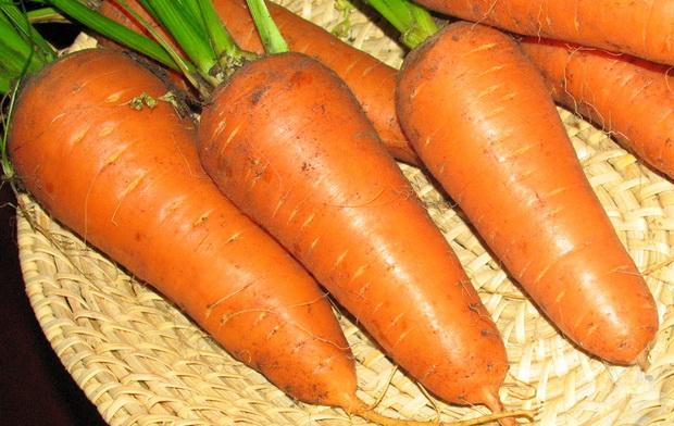 Сорт моркови: Престо   f1